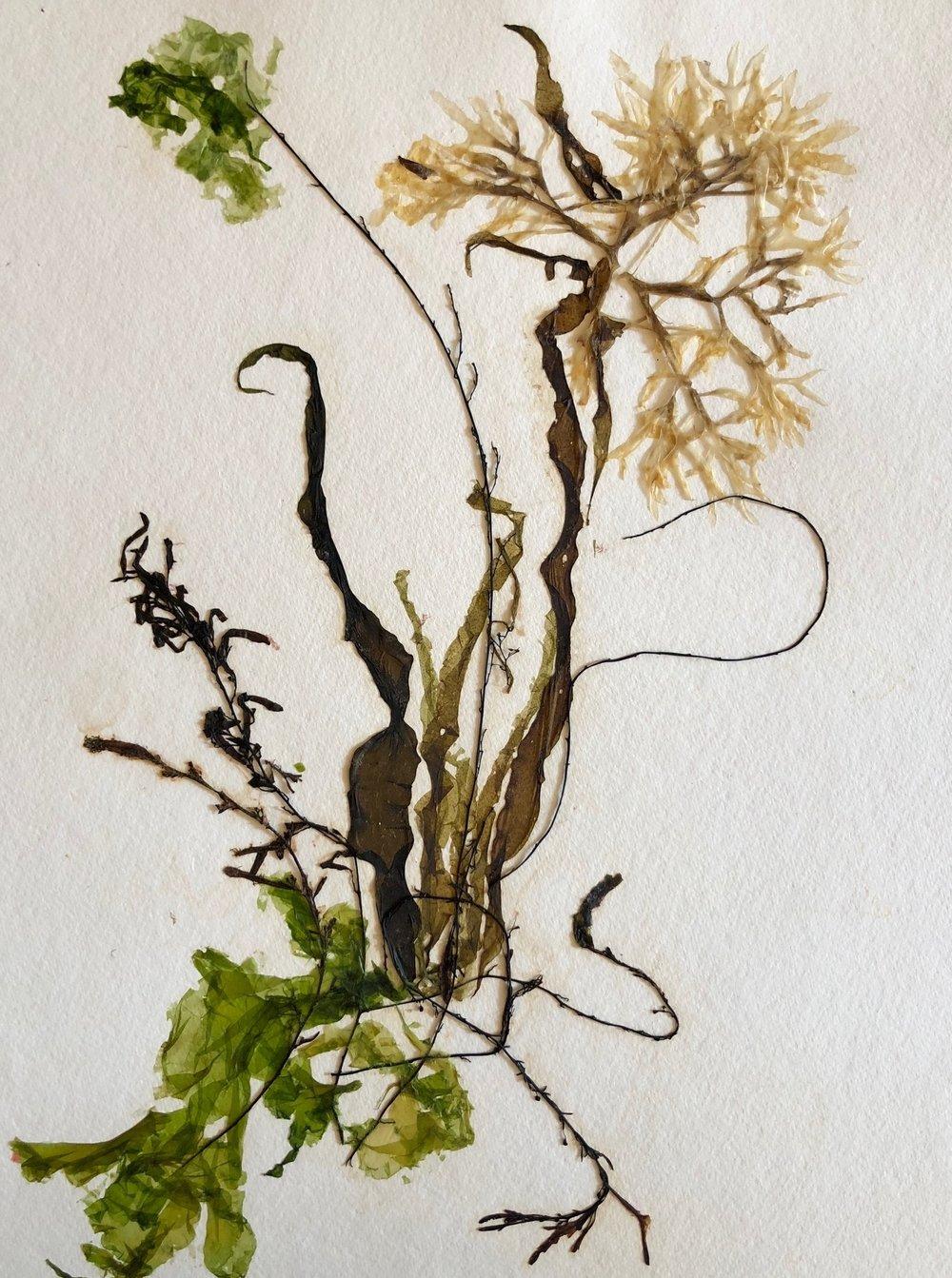Seaweed 4/14, 11x14