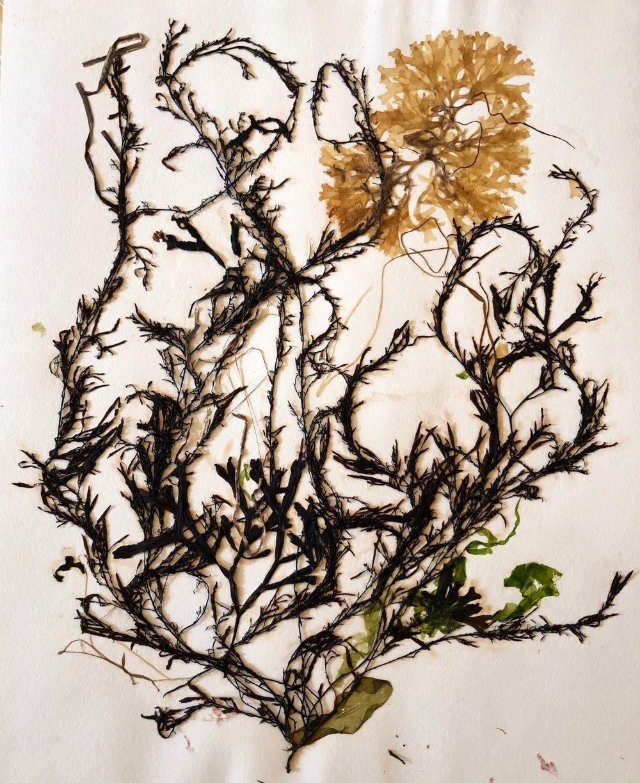 Seaweed 3/13, 11x14