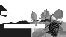 JAYC logo_BW.png