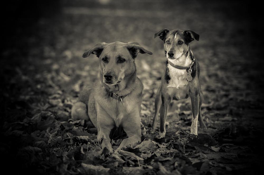 Chance&Joey-40.jpg