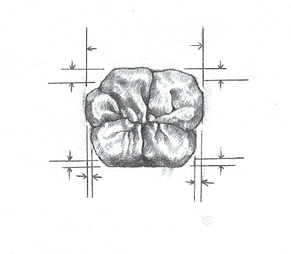 Drawings by Pat Rocha Sr.