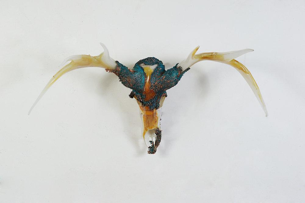 Ivory-Deer-Skull-21.jpg
