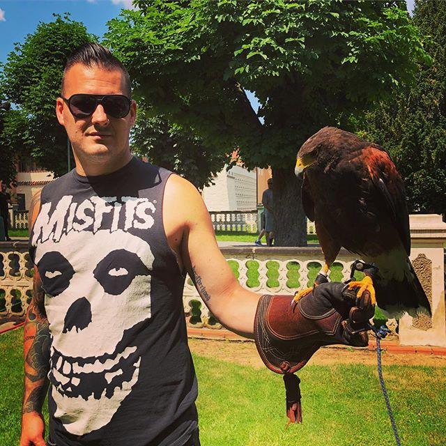 Hangin with our biggest fan in the garden at Prague Castle! ⚡️🐥⚡️ #hawk #bird #birdsofinstagram #raptor