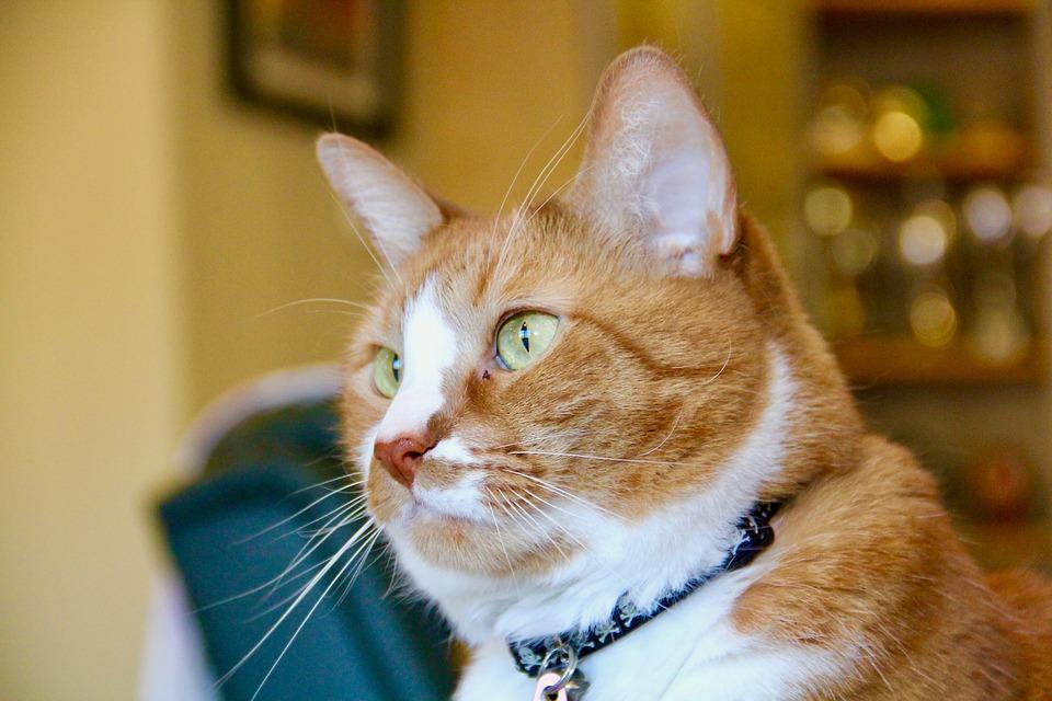 cat-2906082_960_720.jpg