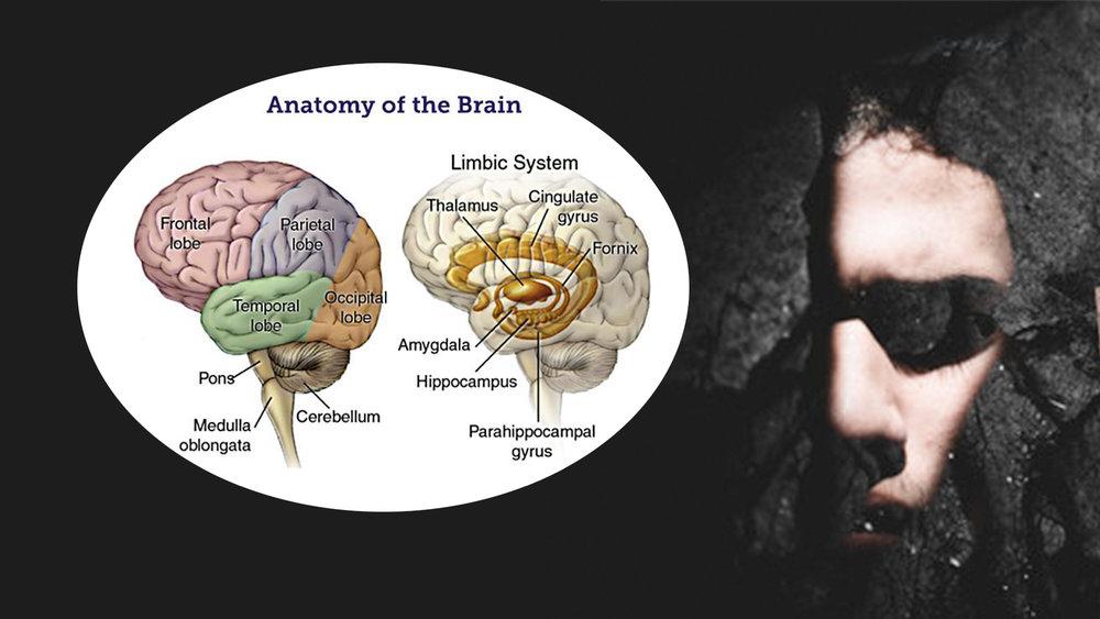 Brain-Anatomy-w-Background.jpg