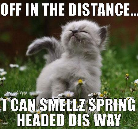 cat-funny-meow-spring-Favim.com-4044091.jpg