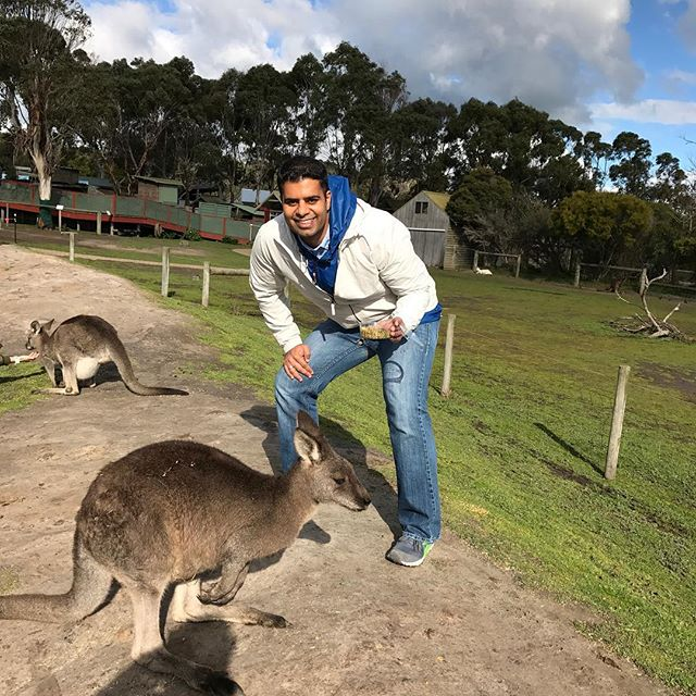 🐾🕴🏿Kangroo feeding Down Under🤣🐾🐾🐾 #australia