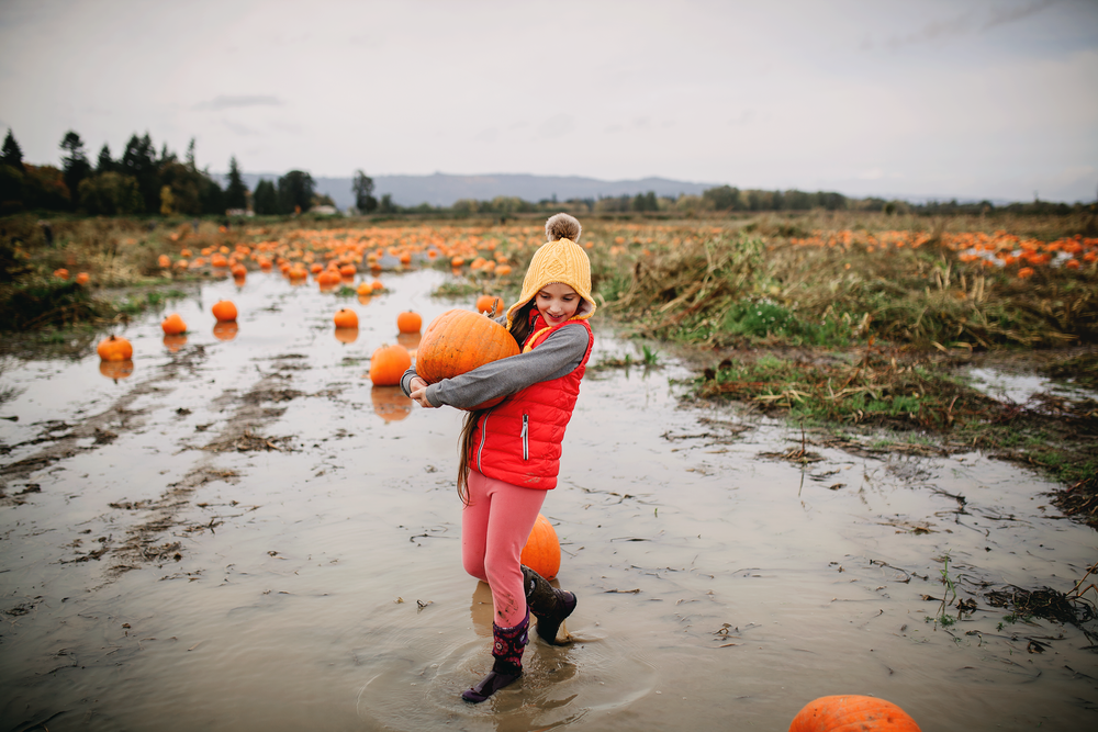 portland pumpkin patch
