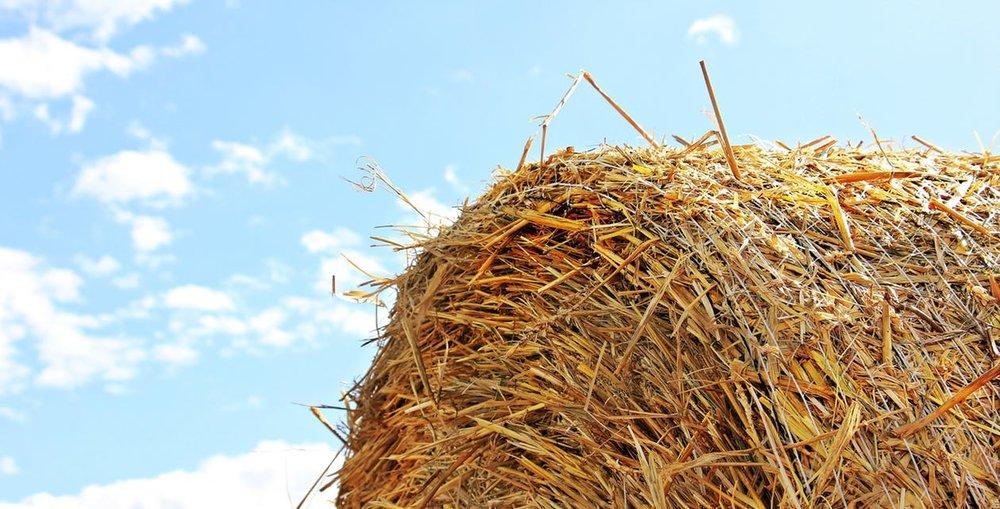 straw-PEXEL pic .jpg
