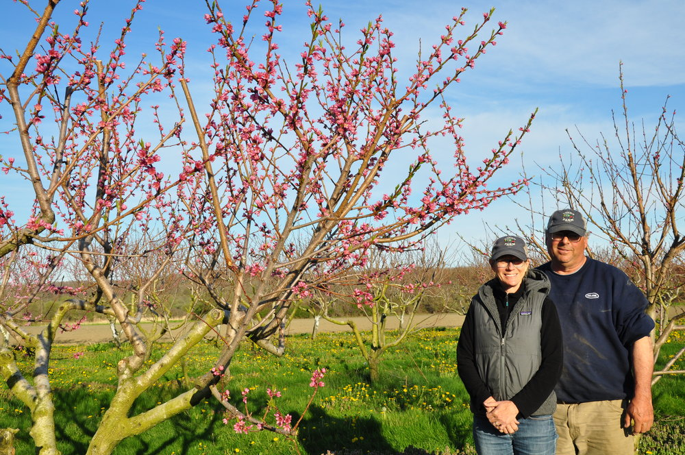 Tyler and Karla Young with Young Family Farm's blossoming peach trees