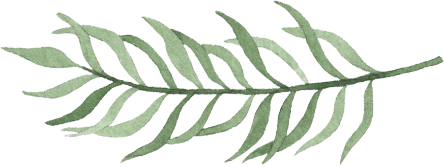 Leaves4.png