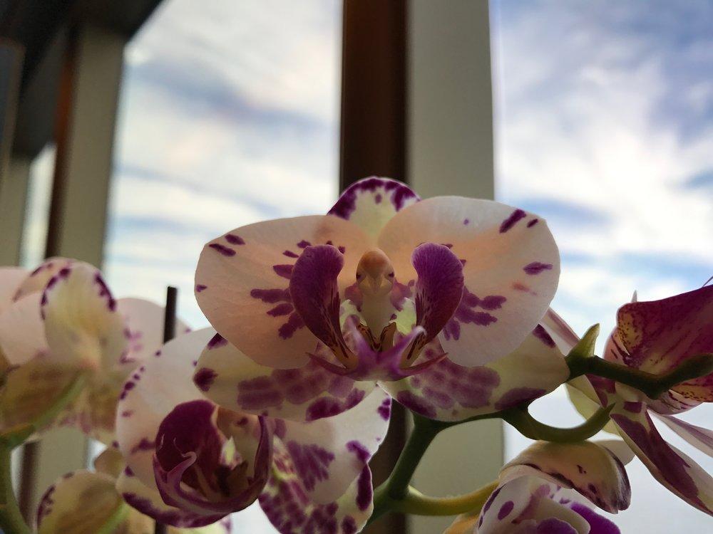 Morning Flower