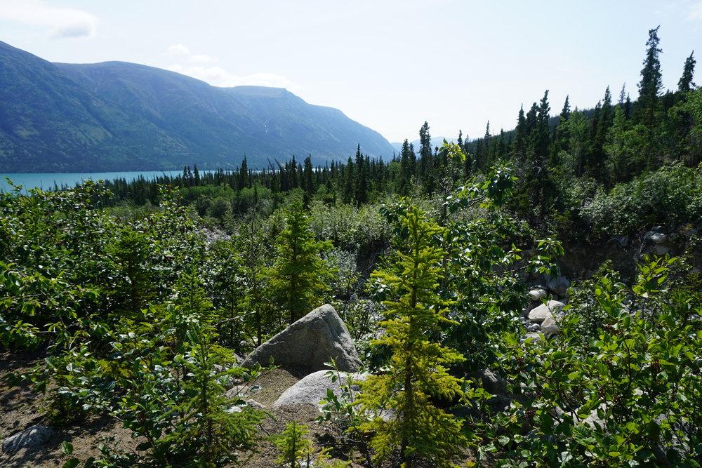 My Yukon