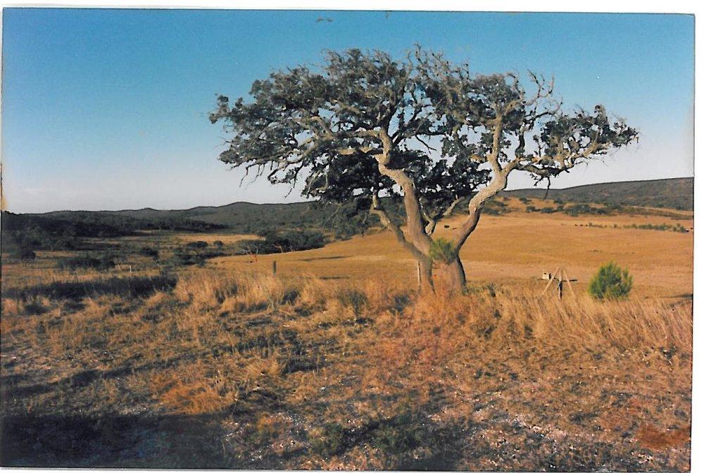 F9 Orginalbaumbestand von Vinha Velha.jpg