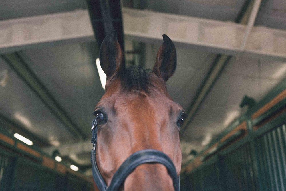 Mind.Body.Horse.Yoga.For.Equestrians.Online.Workshops.Jimena.Peck.Photography.-2.jpg