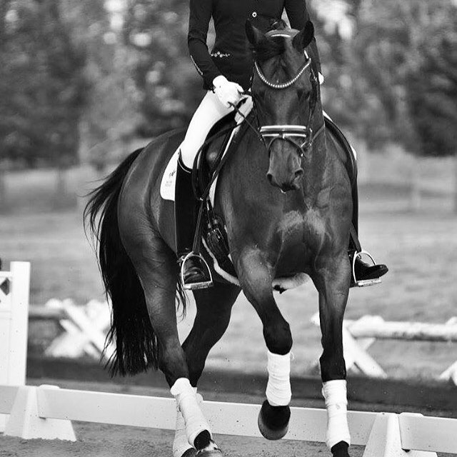 Why Yoga for Equestrians? Work your focus, your mental muscle. Focus makes balance in movement relatively easy.🙌sign up now for our online 21 Day Yoga Challenge for Equestrians! 🐎link in bio