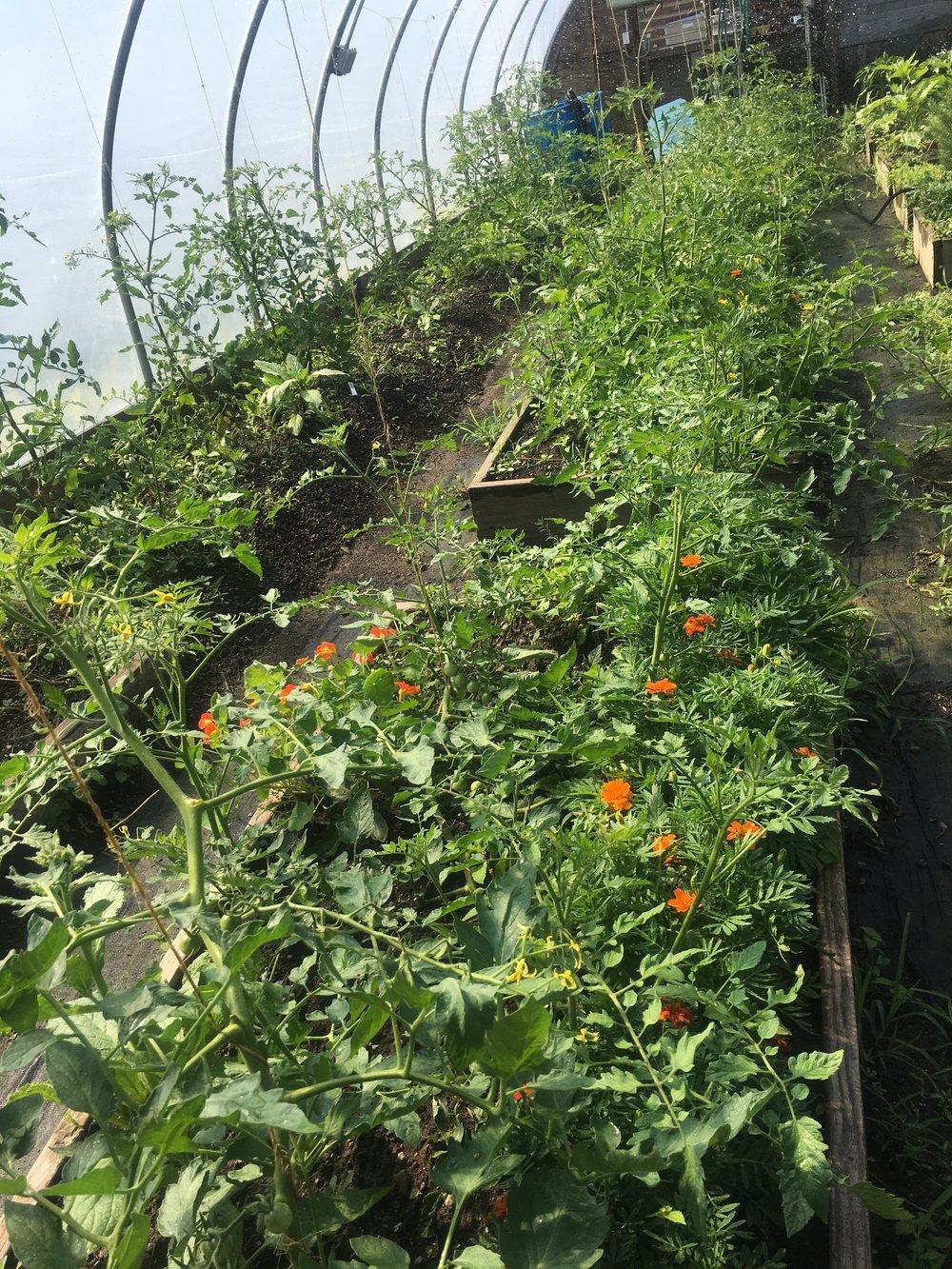 Summer Crops