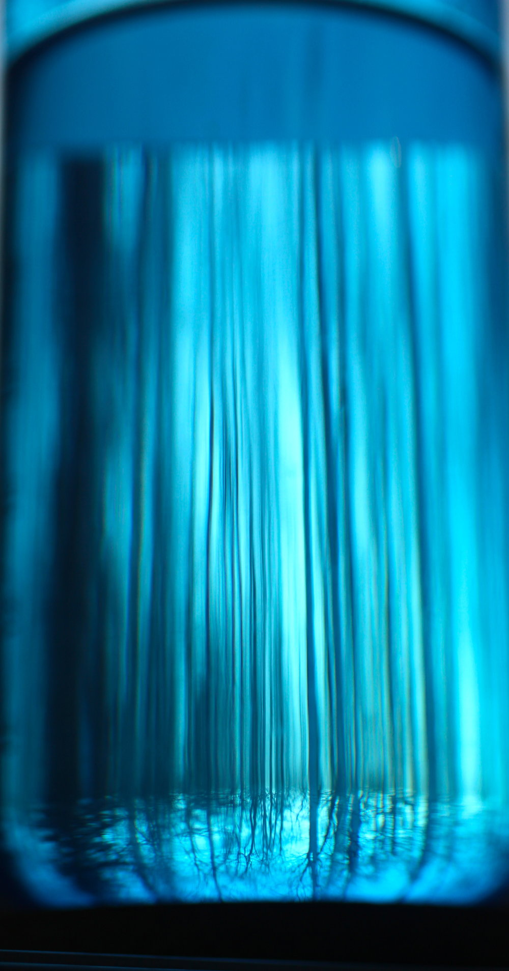 Aqua Forest - Alaskan Forest through a Water Bottle