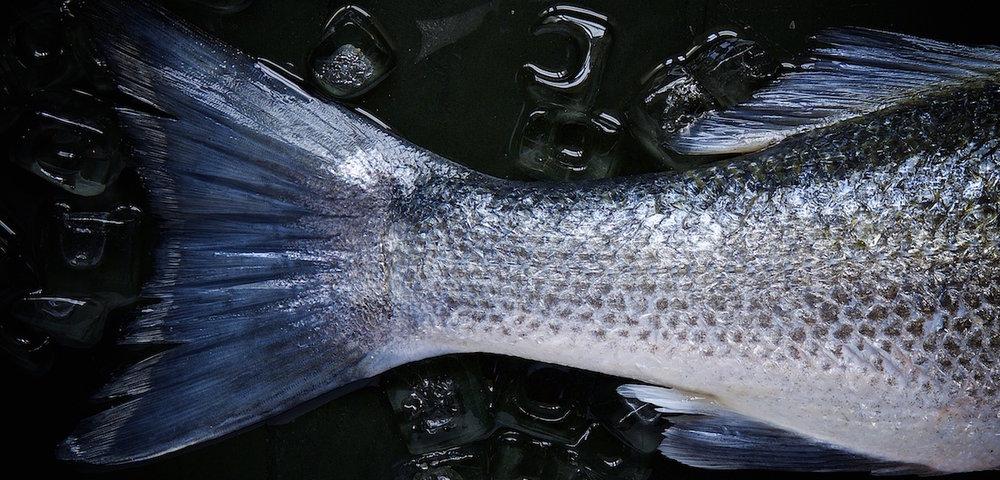 Fish-Cropped-1250-x-600.jpg