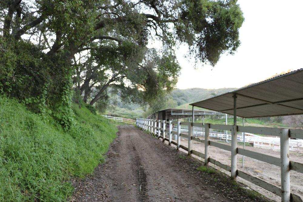 bridle trail 1.JPG