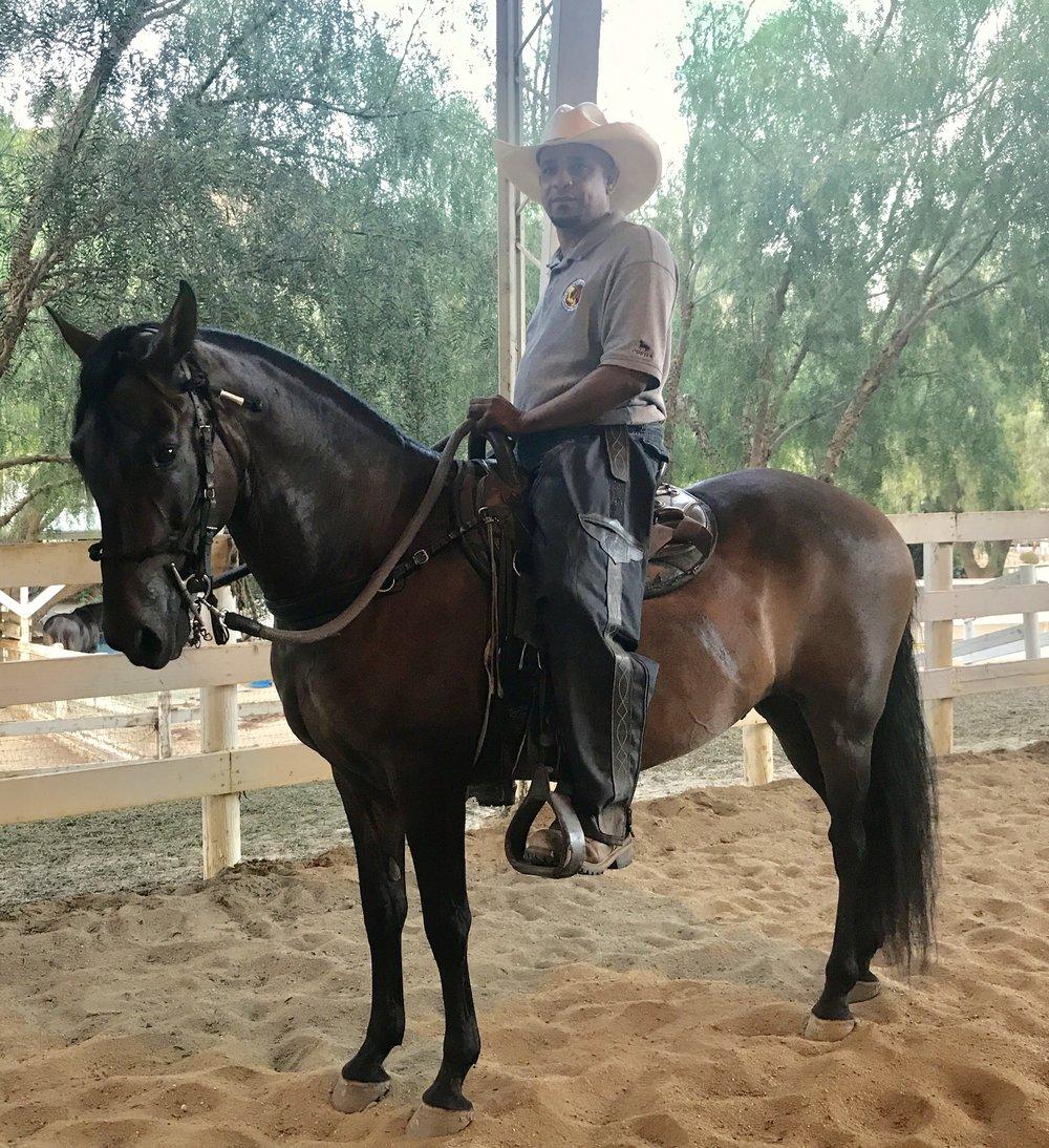 ESTUPENDO  about this horse