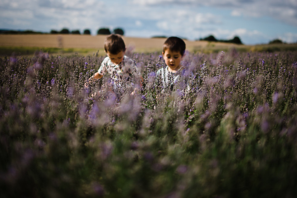Children portrait photography at the lavender farm, Hertfordshire