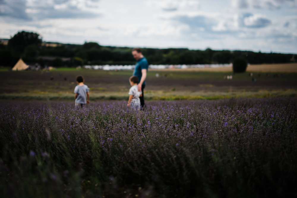 Lavender fields in Cambridgeshire - Diana Hagues Photography