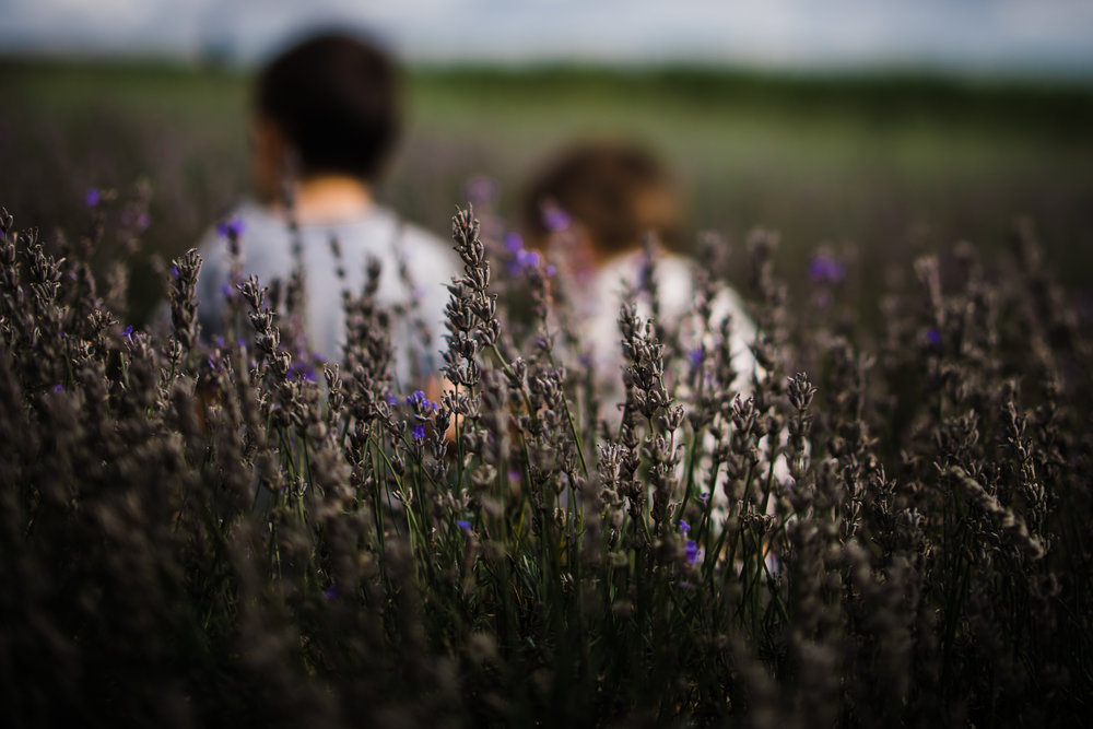 Diana Hagues Photography Freelensing summer adventures - Hitchin  Lavender.jpg