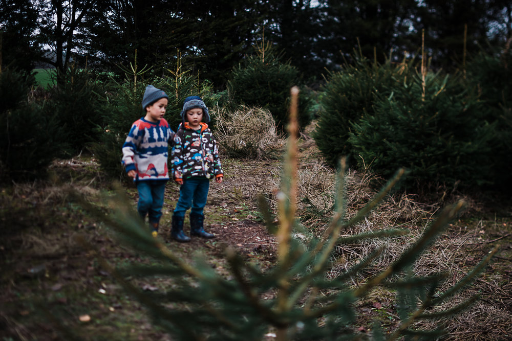 Christmas Tree Farm - Cambridgeshire - Storytelling and Documentary photography-4.jpg