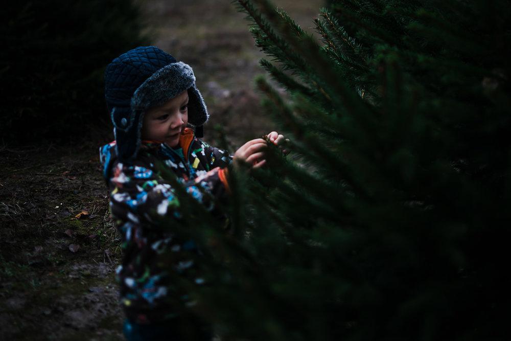 Christmas Tree Farm - Cambridgeshire - Storytelling and Documentary photography-13.jpg