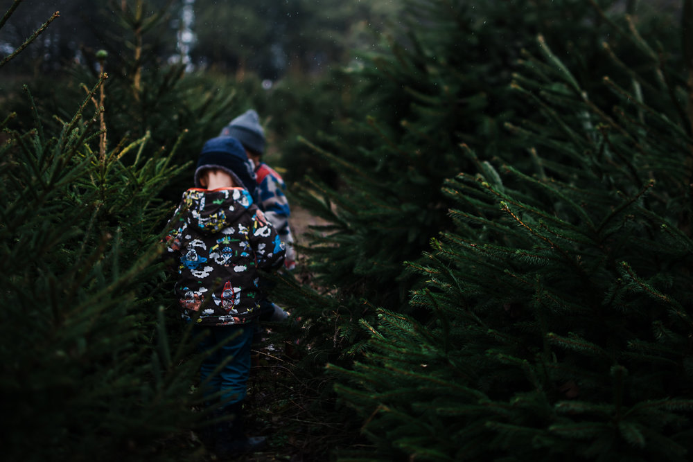 Walking through the Christmas trees - Diana Hagues - Cambridge storytelling and documentary photography