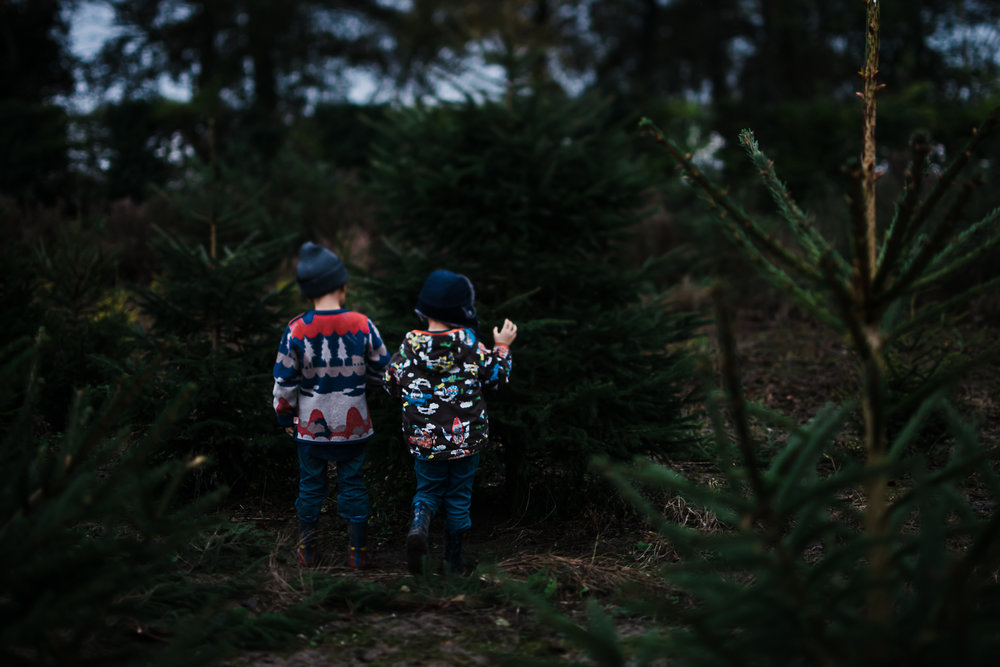 Christmas Tree Farm - Cambridgeshire - Storytelling and Documentary photography-15.jpg
