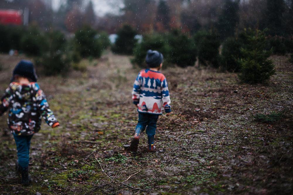 Children off to explore at Bottisham Christmas Tree farm, Cambridgeshire