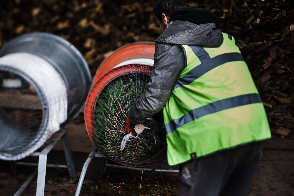 Christmas Tree Farm - Cambridgeshire - Storytelling and Documentary photography-35.jpg