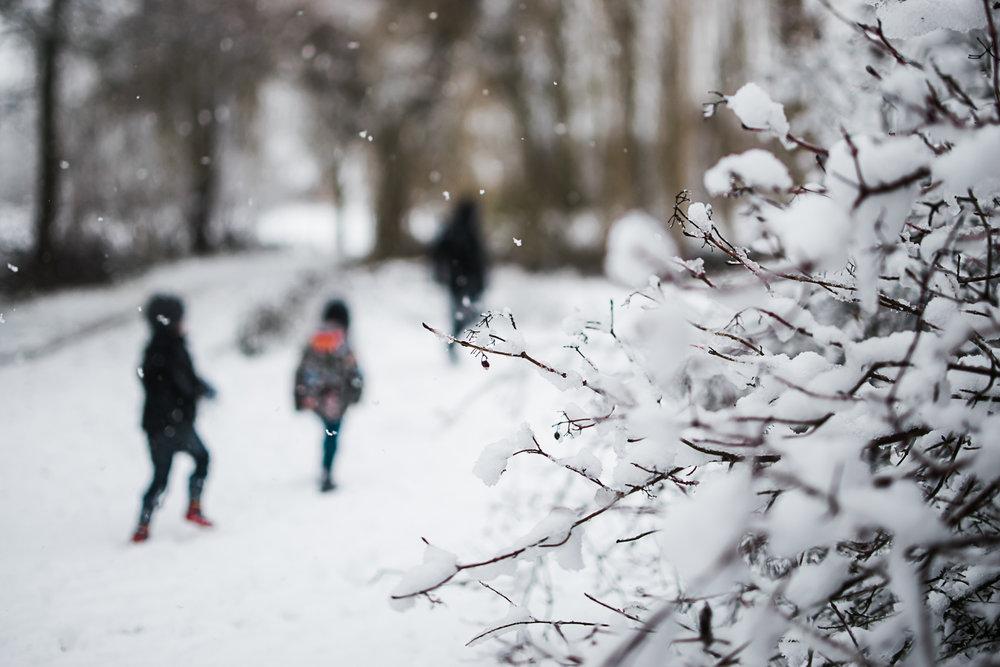 Snow by photographer D Hagues