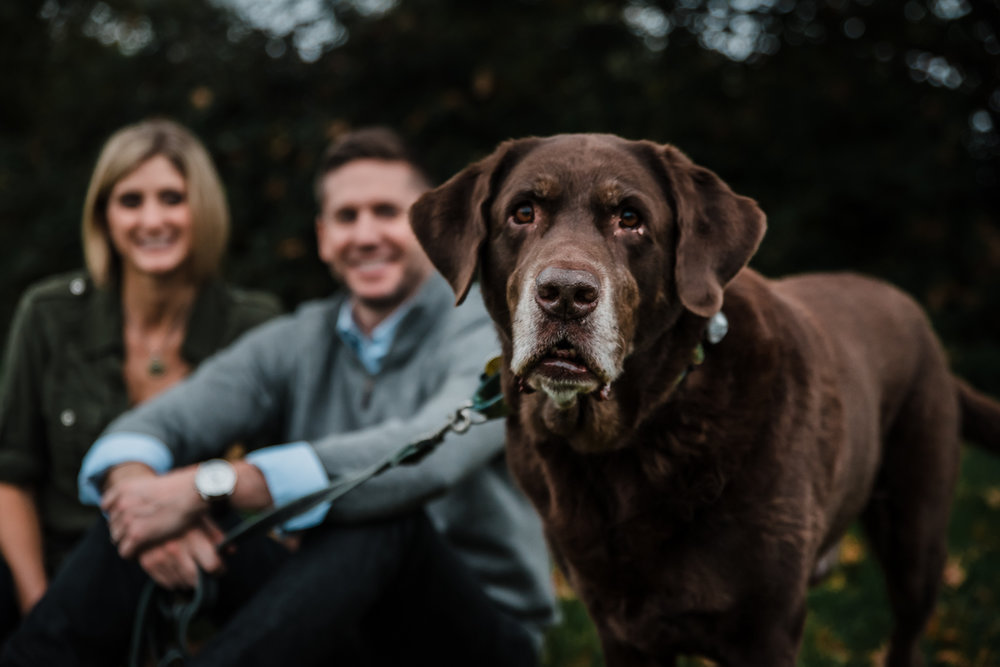 Family dog during a photoshoot