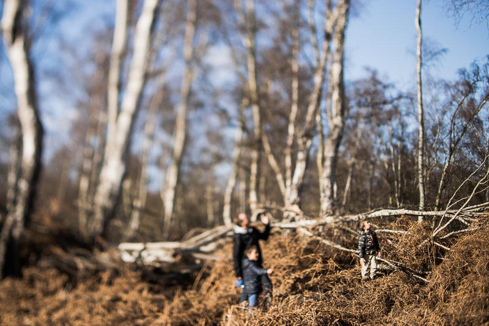 Freelensing woodland photograph