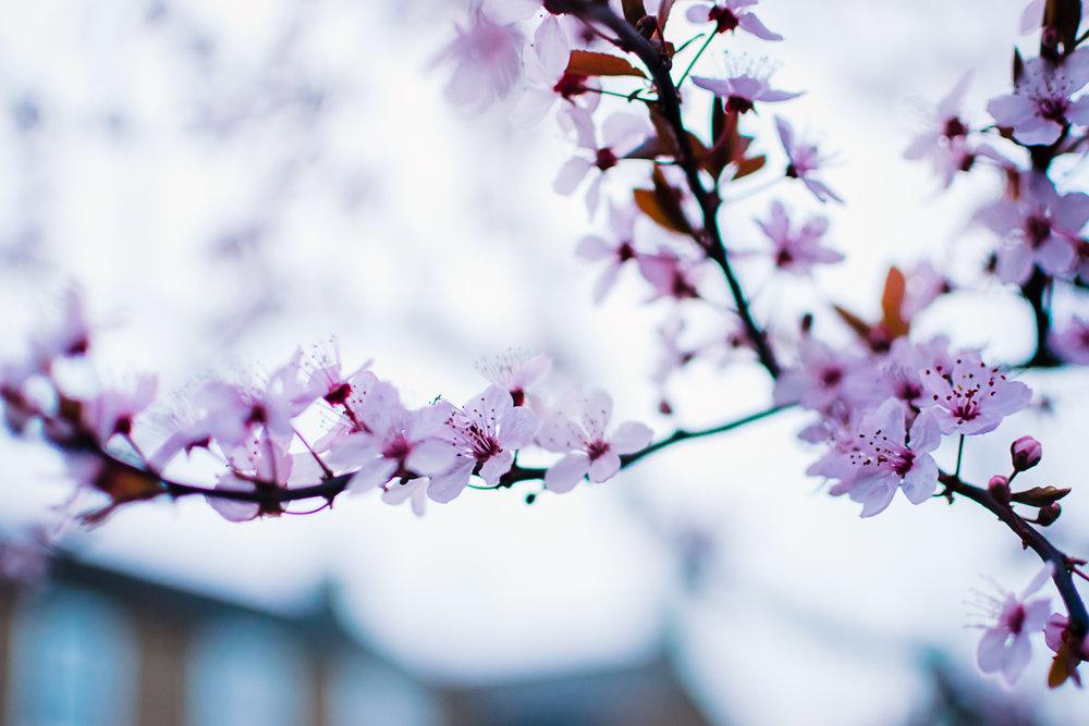 Spring flowers in nature freelensing photos