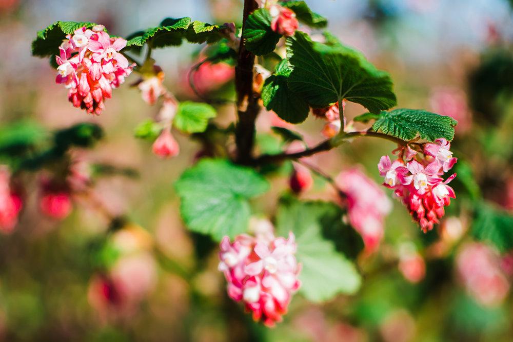 Spring flowers in the wildlife garden