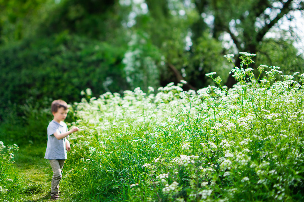 Young boy standing by some white hemlock flowers