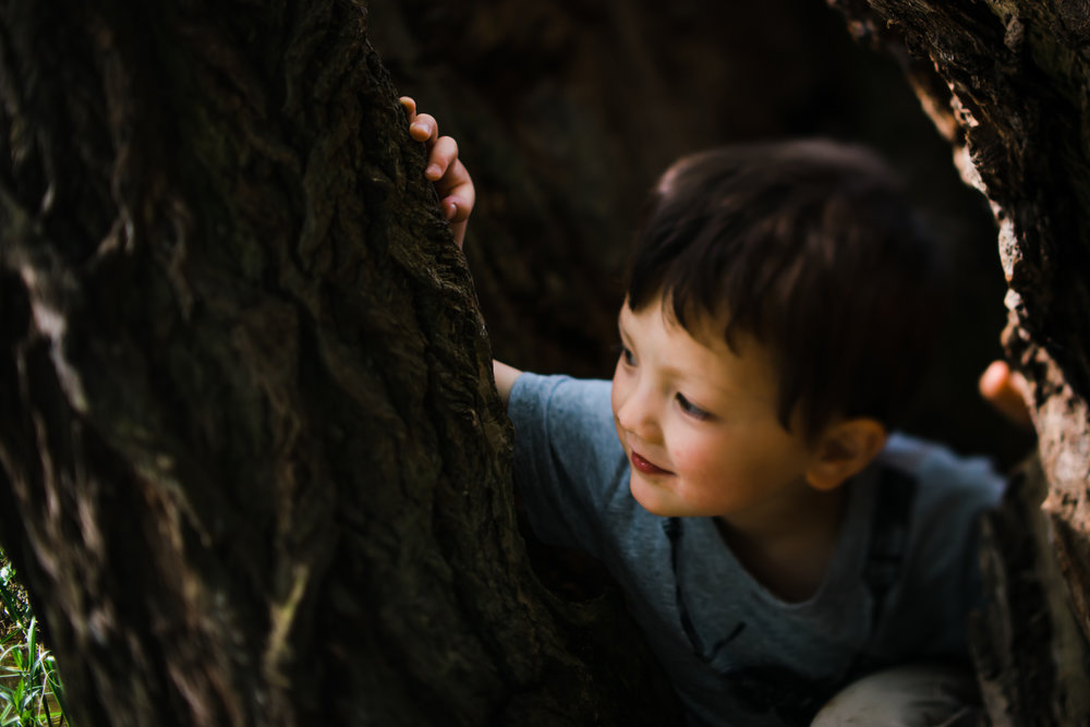 Portrait of a boy sitting in a tree