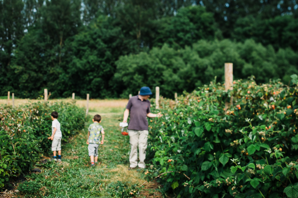 Family picking raspberries at a pick-your-own farm in Cambridges