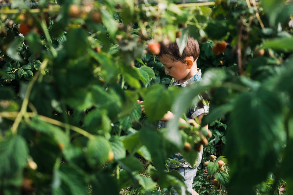 Boy framed between the raspberry bushes