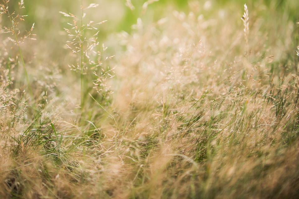 Freelensing grass