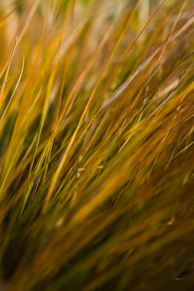 Autumn grass leaves yellow colour