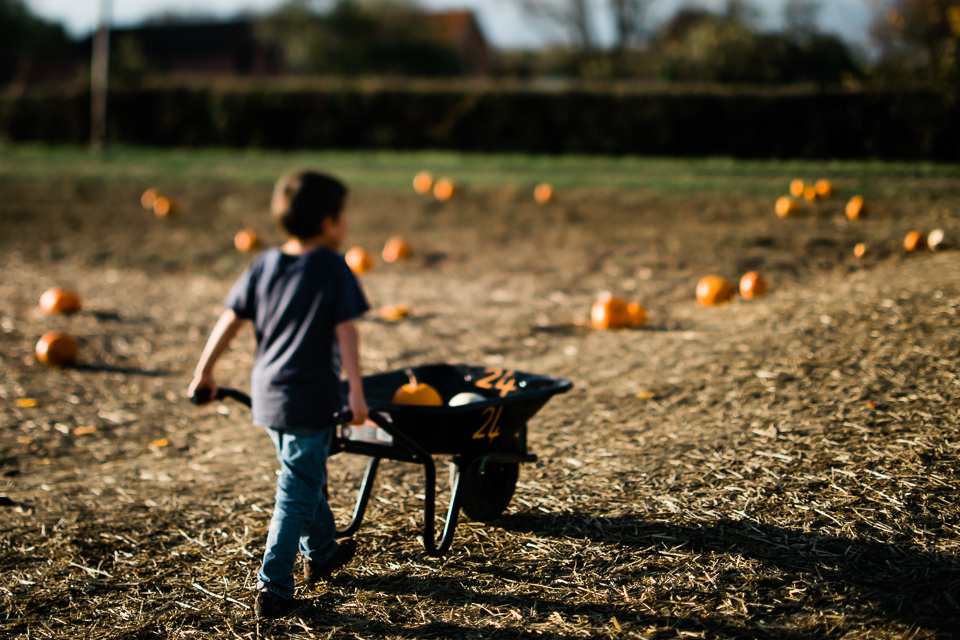 Boy wheeling his pumpkins from the pumpkin field