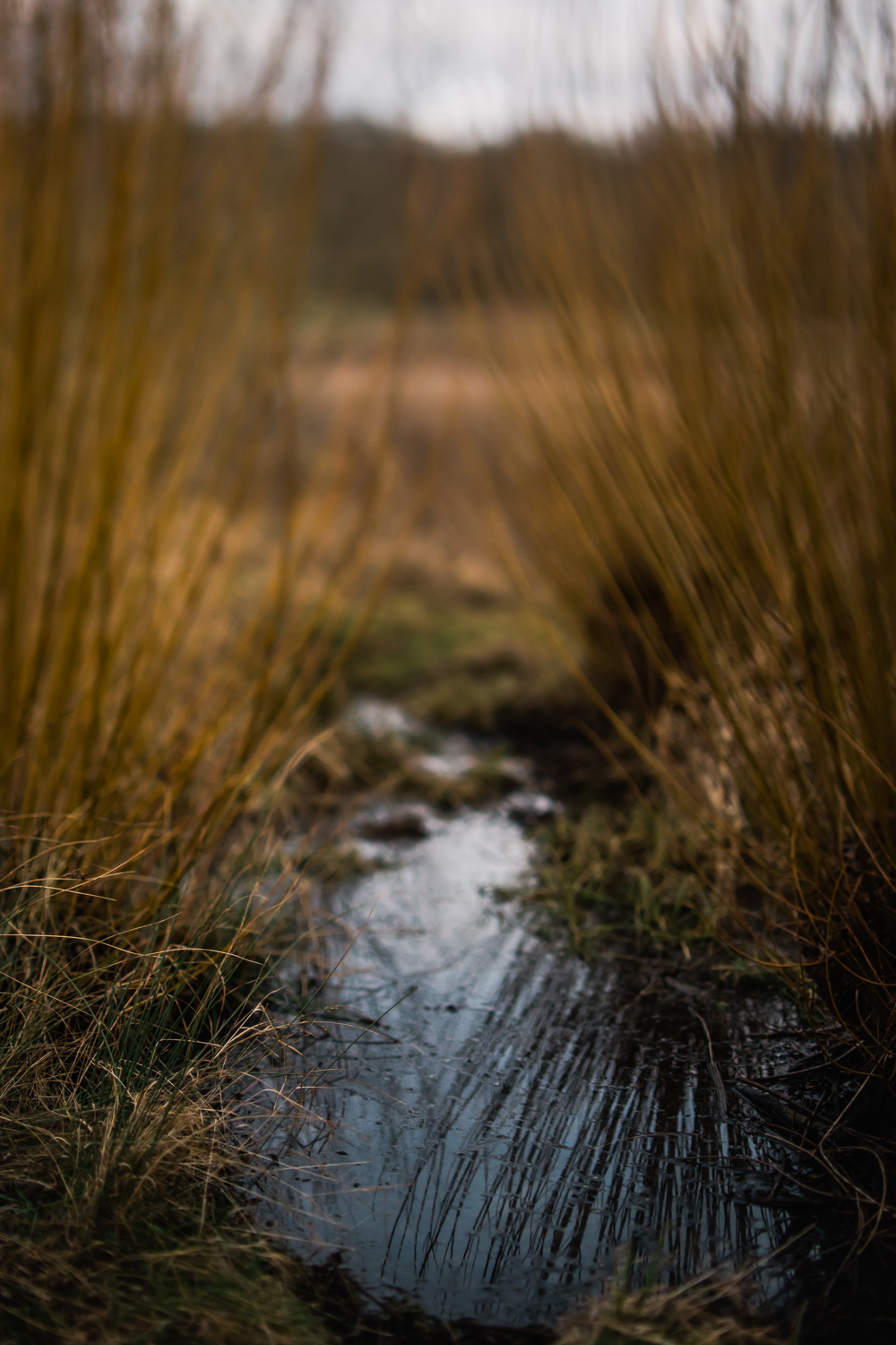Freelensed photo of willow by a pond