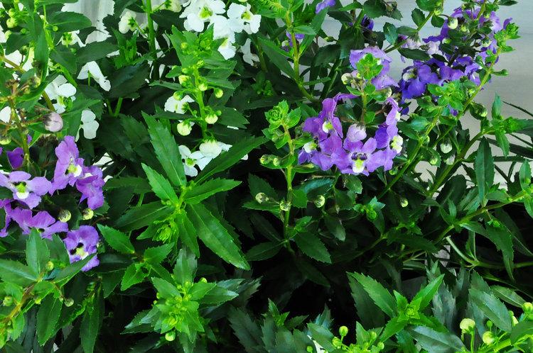 garden+5.jpg