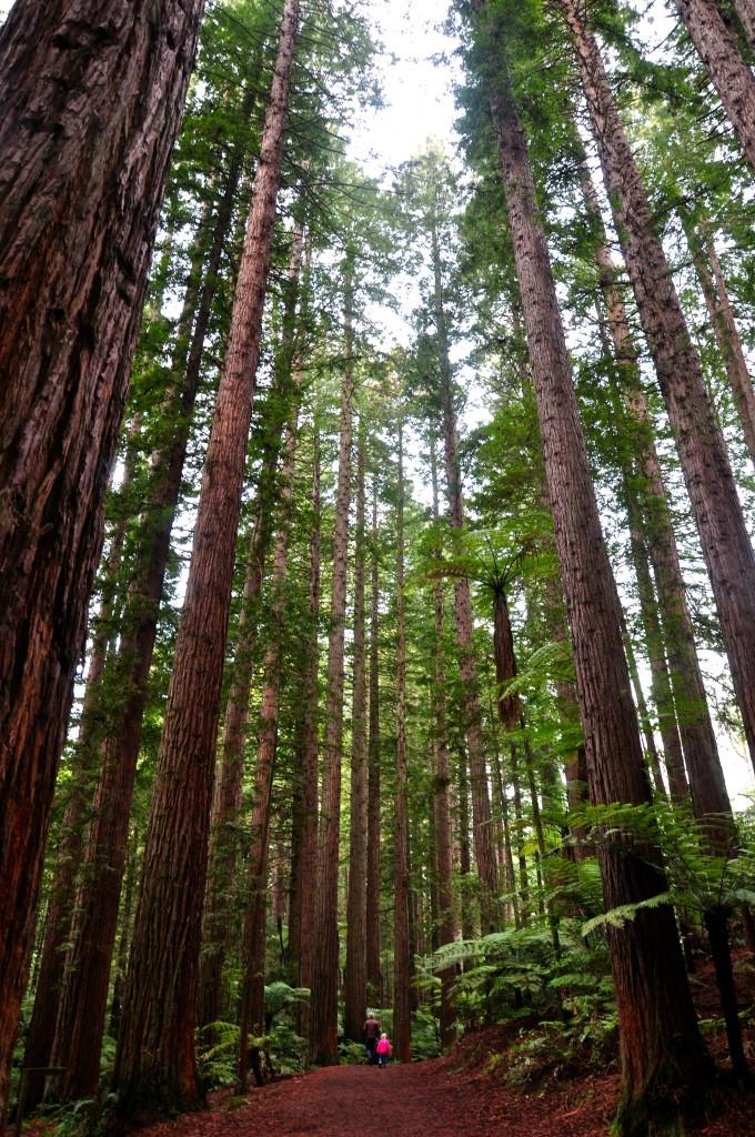 Redwood Memorial Grove, Rotorua