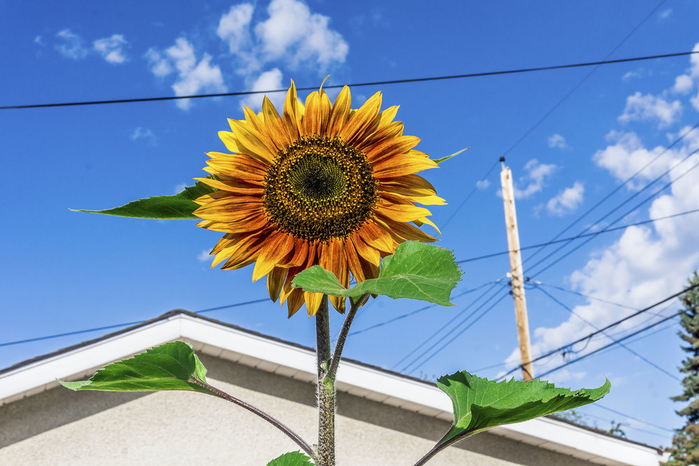 Sunny-Skies.jpg